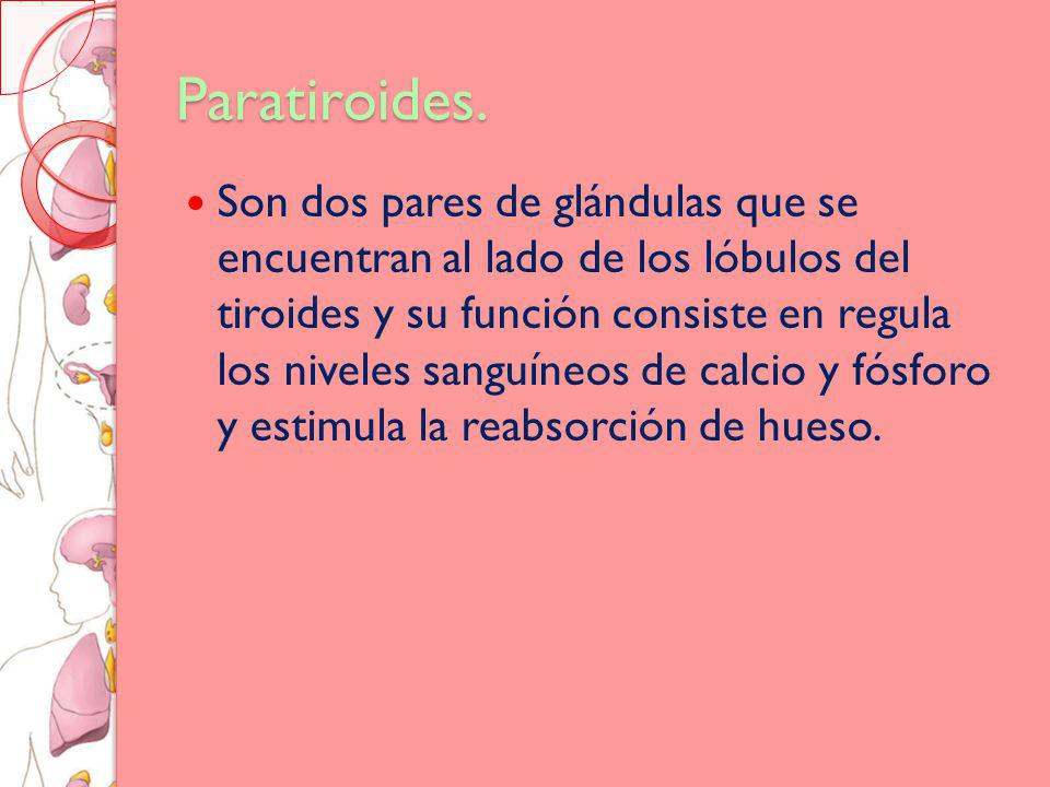 Paratiroides.