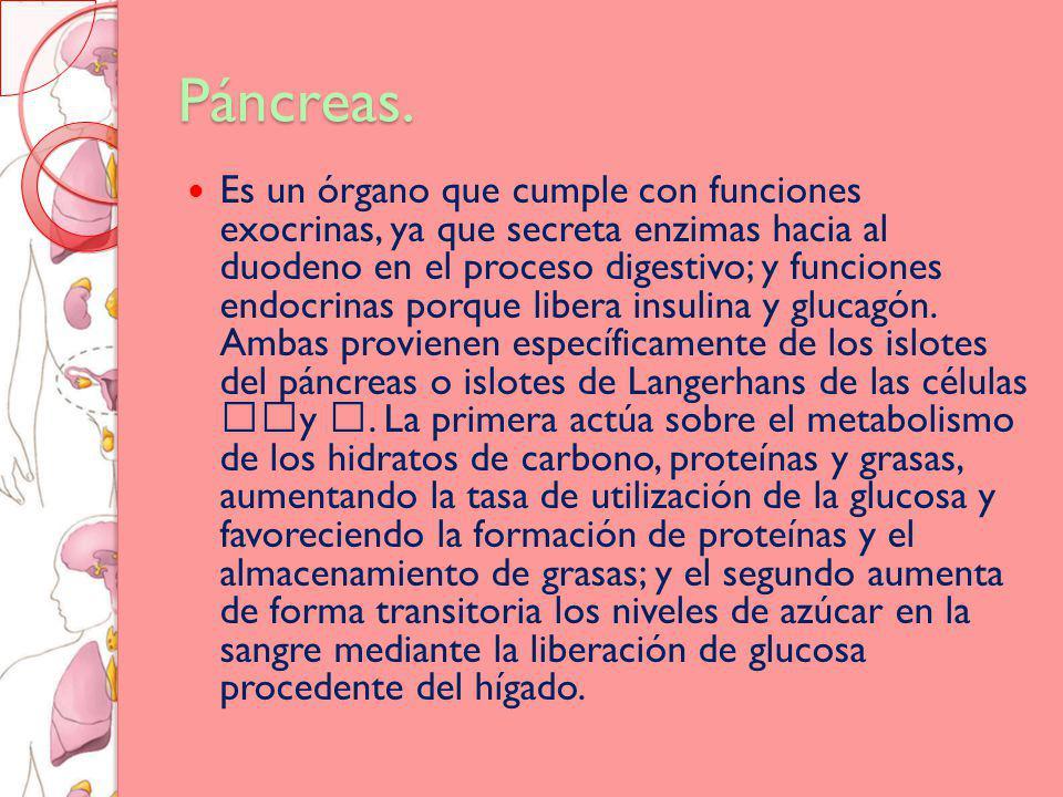 Páncreas.