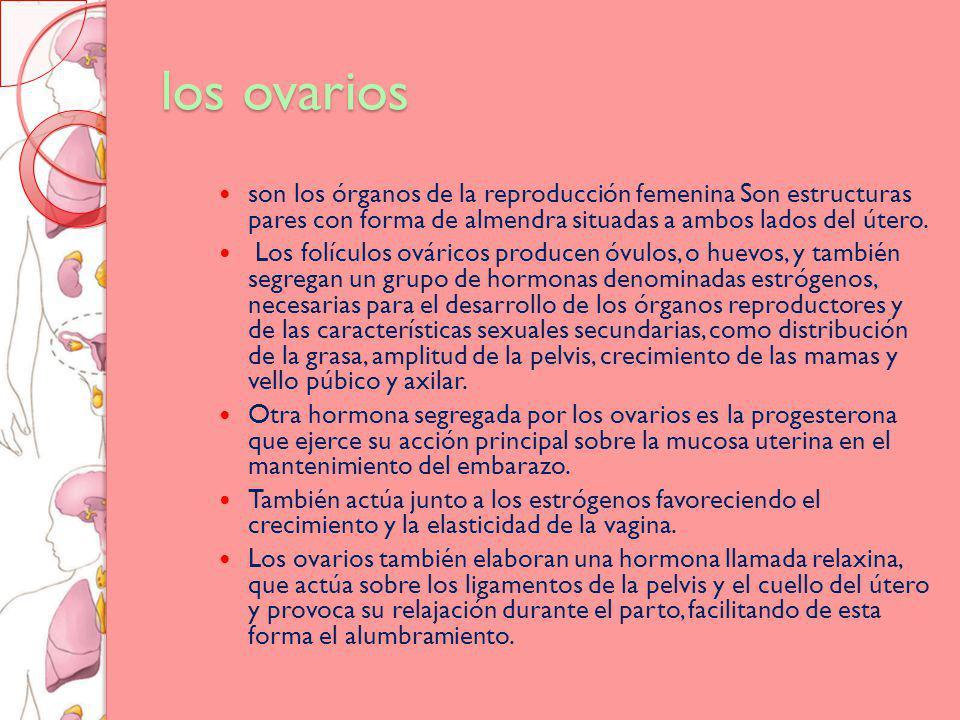 los ovarios son los órganos de la reproducción femenina Son estructuras pares con forma de almendra situadas a ambos lados del útero.