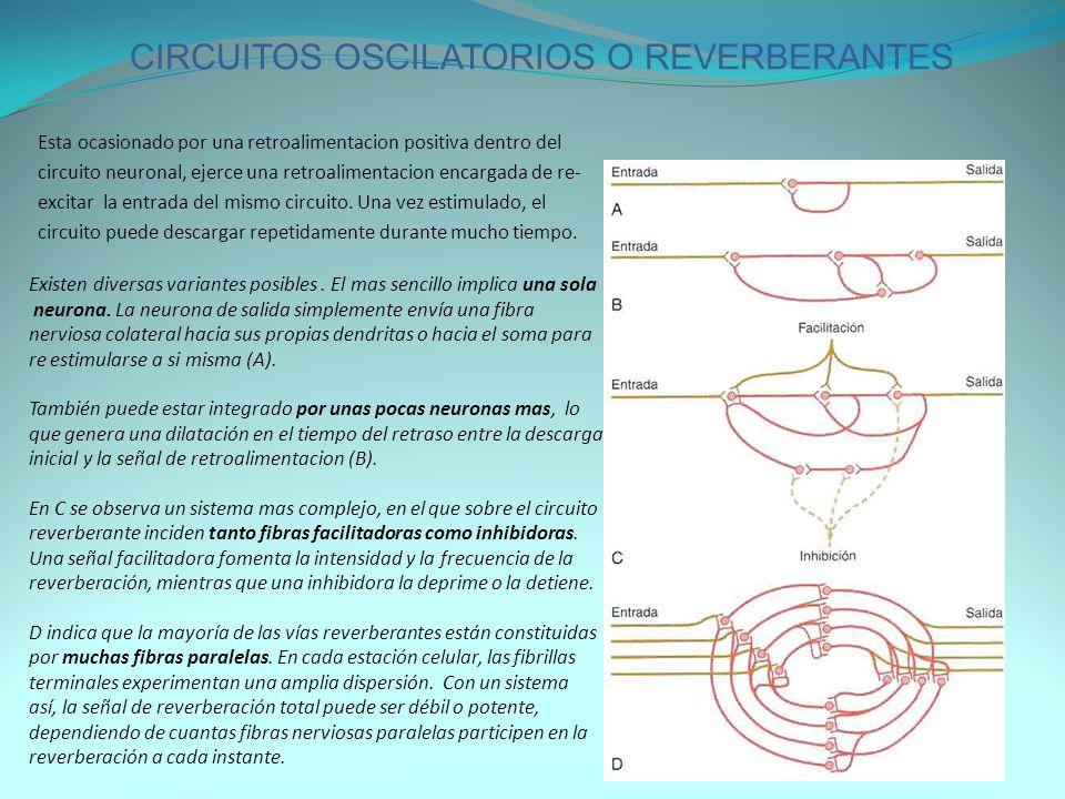 CIRCUITOS OSCILATORIOS O REVERBERANTES
