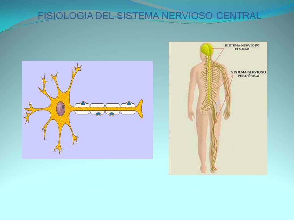 FISIOLOGIA DEL SISTEMA NERVIOSO CENTRAL