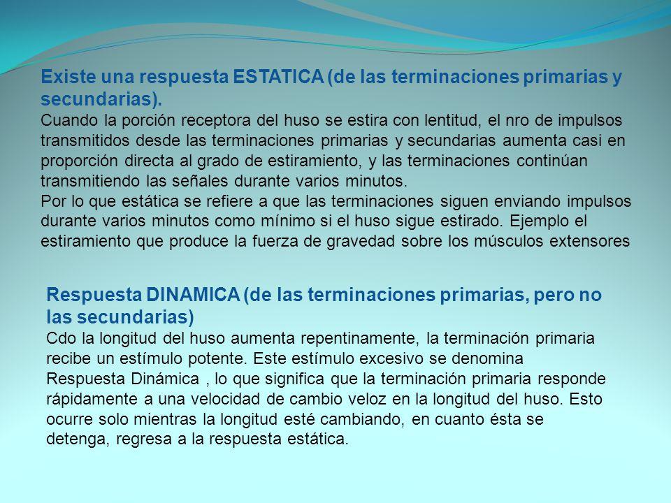 Existe una respuesta ESTATICA (de las terminaciones primarias y secundarias).