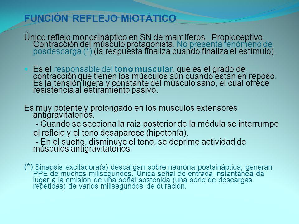 FUNCIÓN REFLEJO MIOTÁTICO