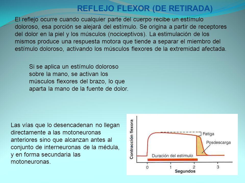 REFLEJO FLEXOR (DE RETIRADA)
