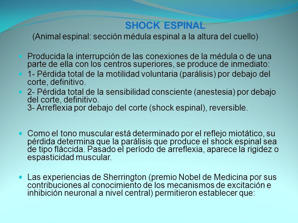 SHOCK ESPINAL (Animal espinal: sección médula espinal a la altura del cuello)