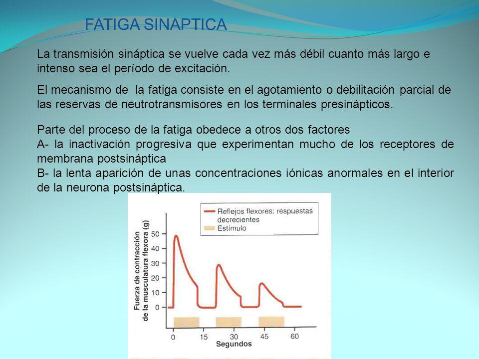 FATIGA SINAPTICA La transmisión sináptica se vuelve cada vez más débil cuanto más largo e intenso sea el período de excitación.