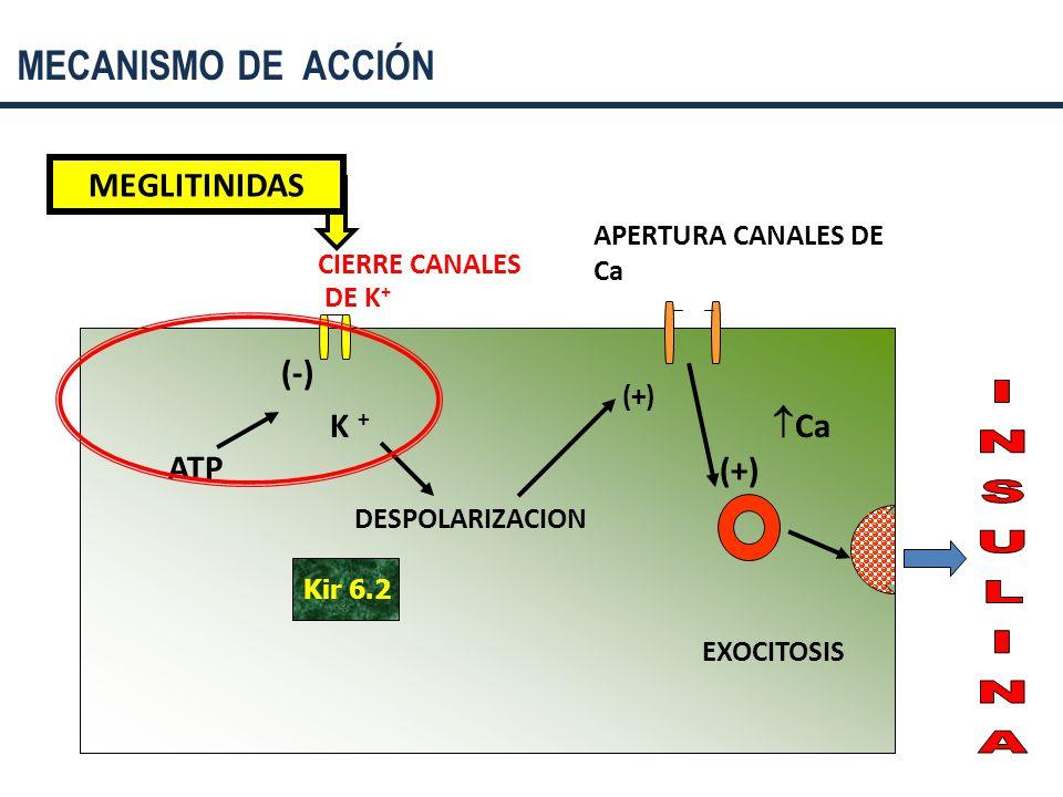 MECANISMO DE ACCIÓN MEGLITINIDAS (-) K + Ca ATP (+) INSULINA