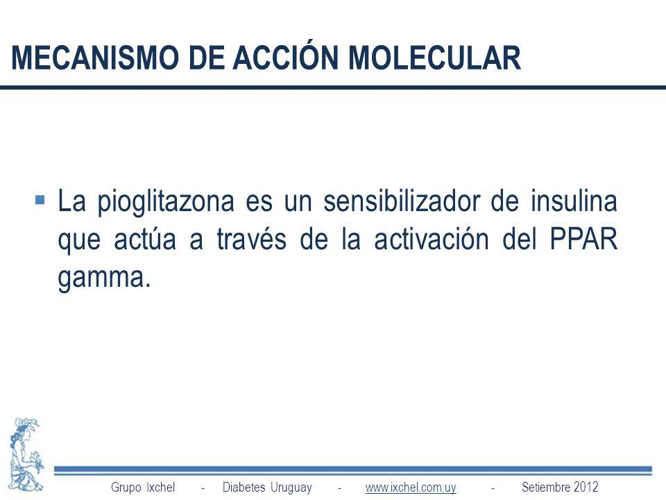 MECANISMO DE ACCIÓN MOLECULAR