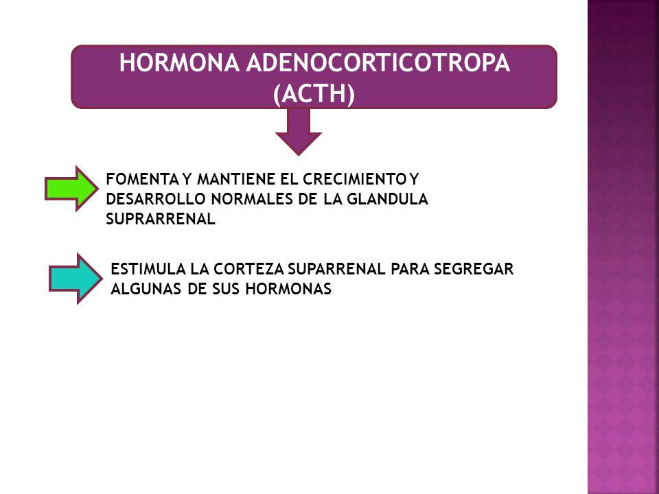HORMONA ADENOCORTICOTROPA (ACTH)