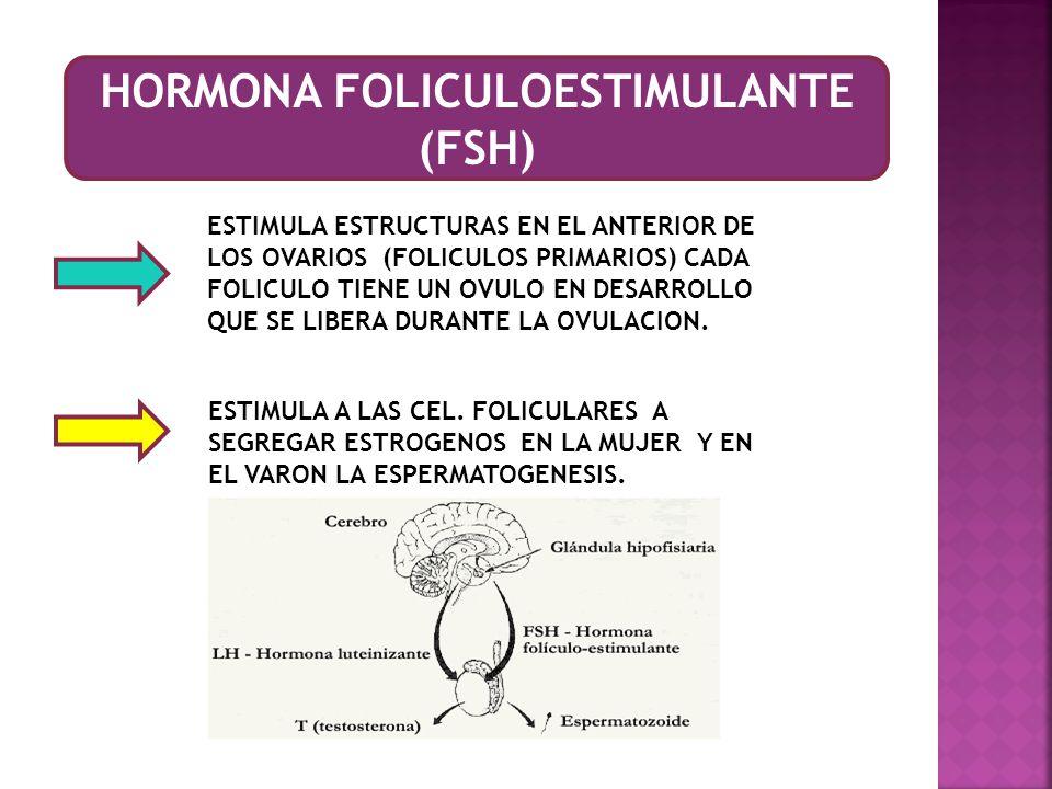 HORMONA FOLICULOESTIMULANTE