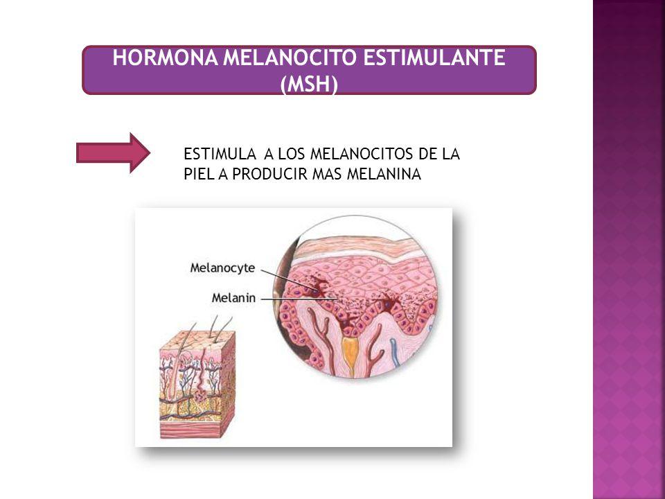 HORMONA MELANOCITO ESTIMULANTE (MSH)