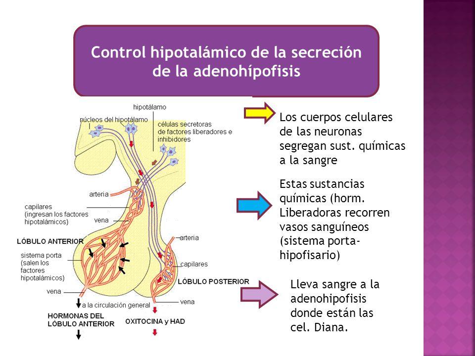 Control hipotalámico de la secreción de la adenohípofisis