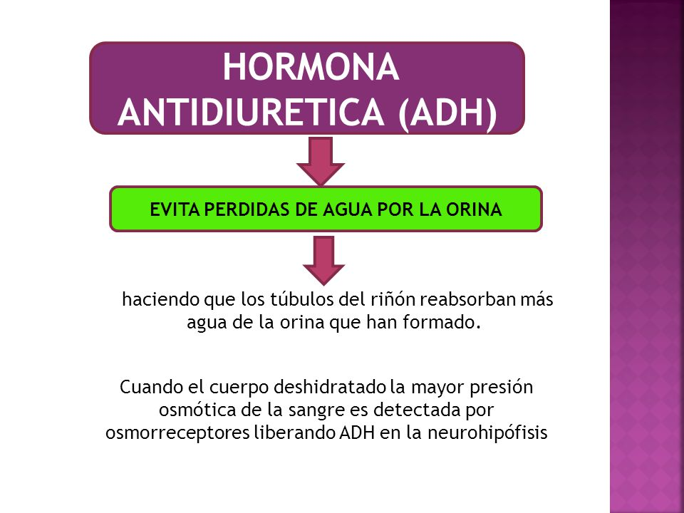 HORMONA ANTIDIURETICA (ADH)