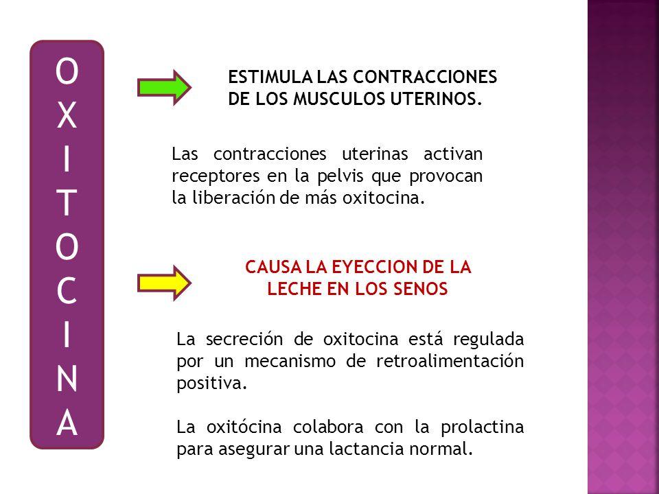 CAUSA LA EYECCION DE LA LECHE EN LOS SENOS