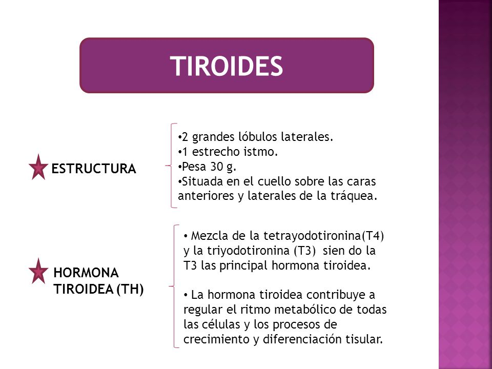 TIROIDES ESTRUCTURA HORMONA TIROIDEA (TH) 2 grandes lóbulos laterales.