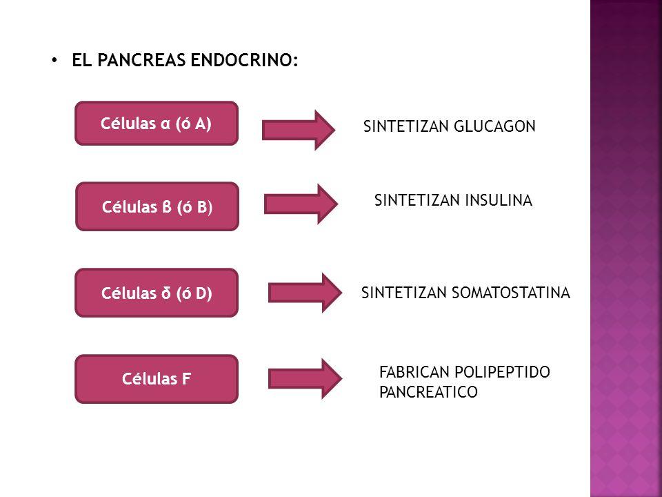 EL PANCREAS ENDOCRINO: