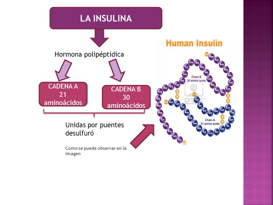 LA INSULINA Hormona polipéptidica CADENA A CADENA B 21 aminoácidos