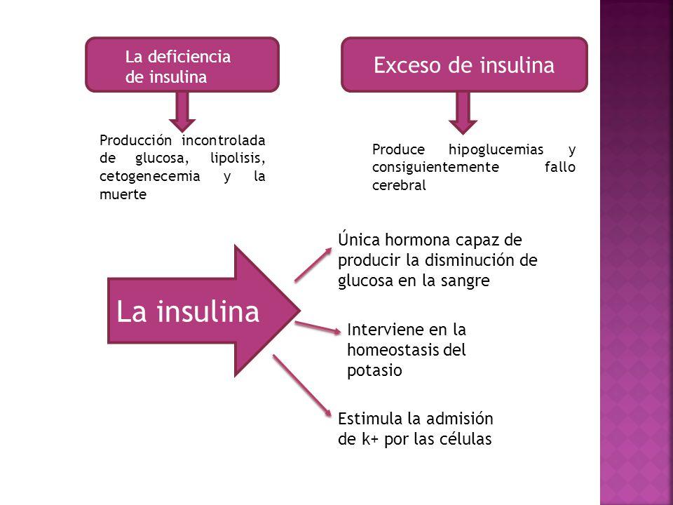 La insulina Exceso de insulina La deficiencia de insulina