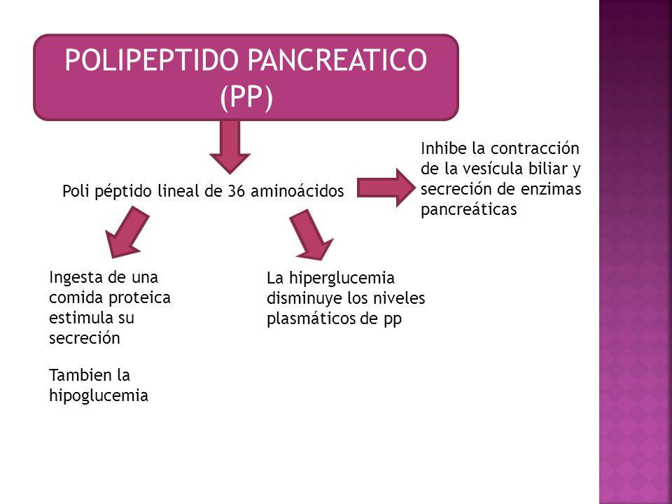 POLIPEPTIDO PANCREATICO (PP)