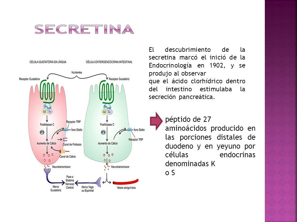 El descubrimiento de la secretina marcó el inició de la Endocrinología en 1902, y se produjo al observar