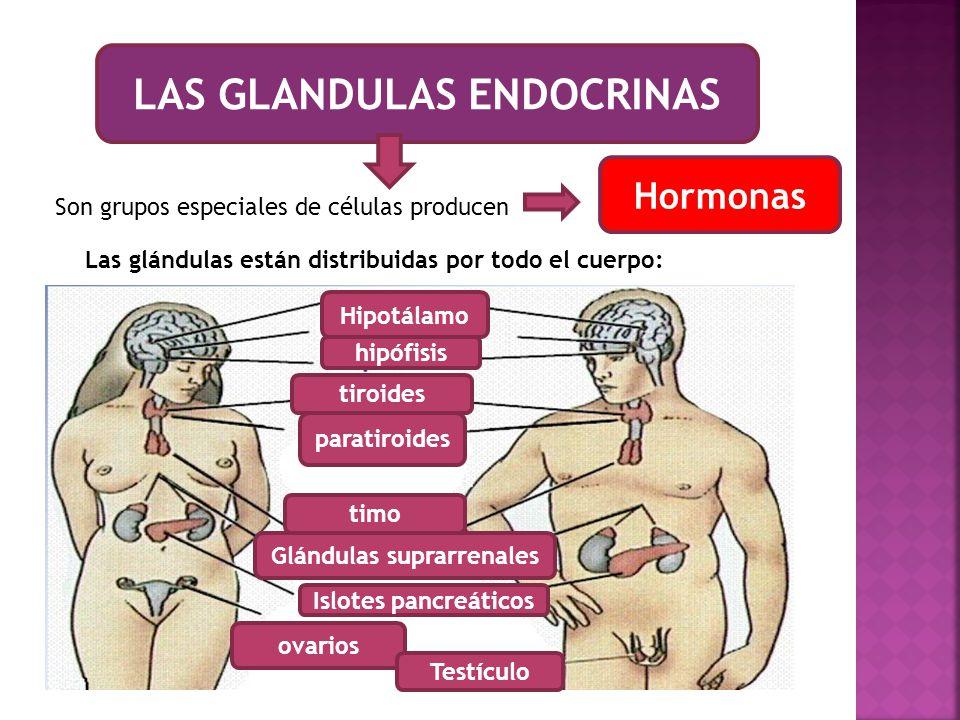 LAS GLANDULAS ENDOCRINAS Glándulas suprarrenales