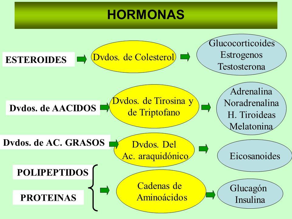 HORMONAS Glucocorticoides Estrogenos Testosterona Dvdos. de Colesterol