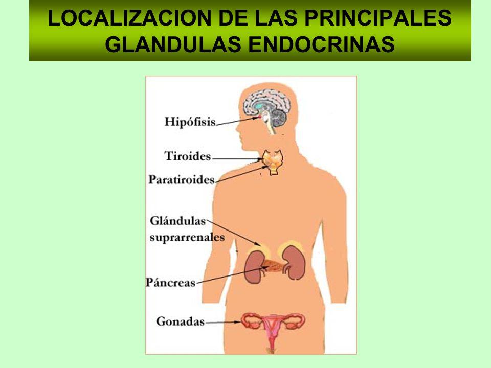 LOCALIZACION DE LAS PRINCIPALES GLANDULAS ENDOCRINAS
