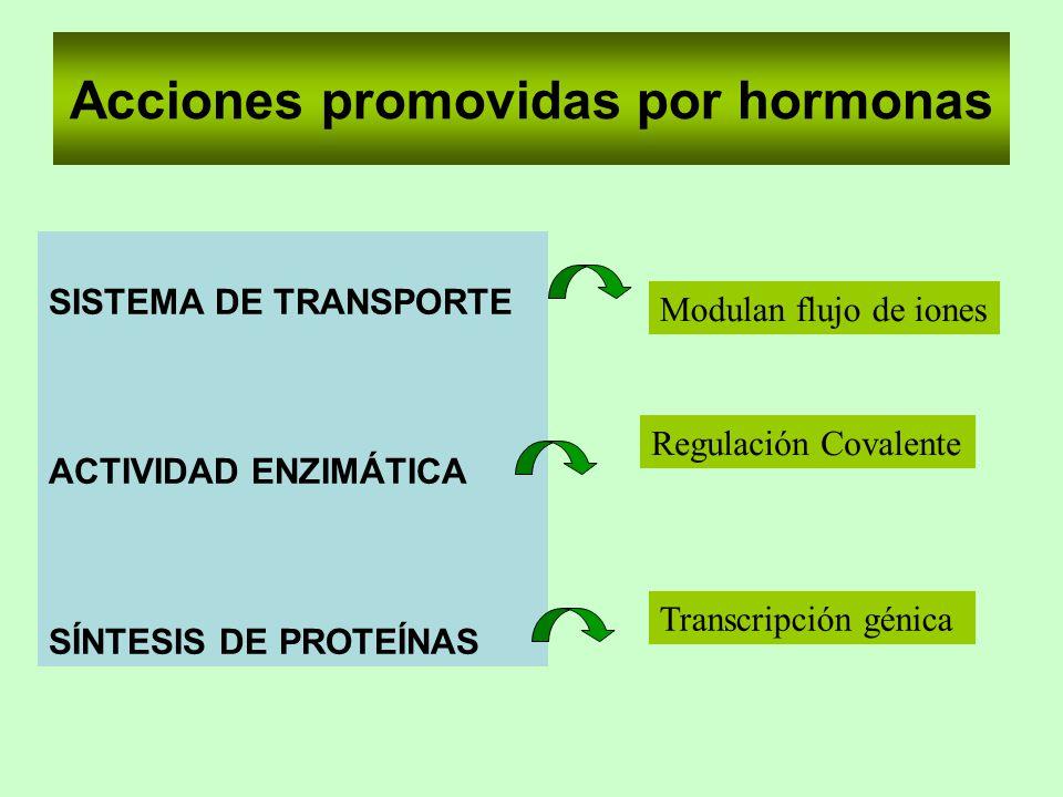 Acciones promovidas por hormonas