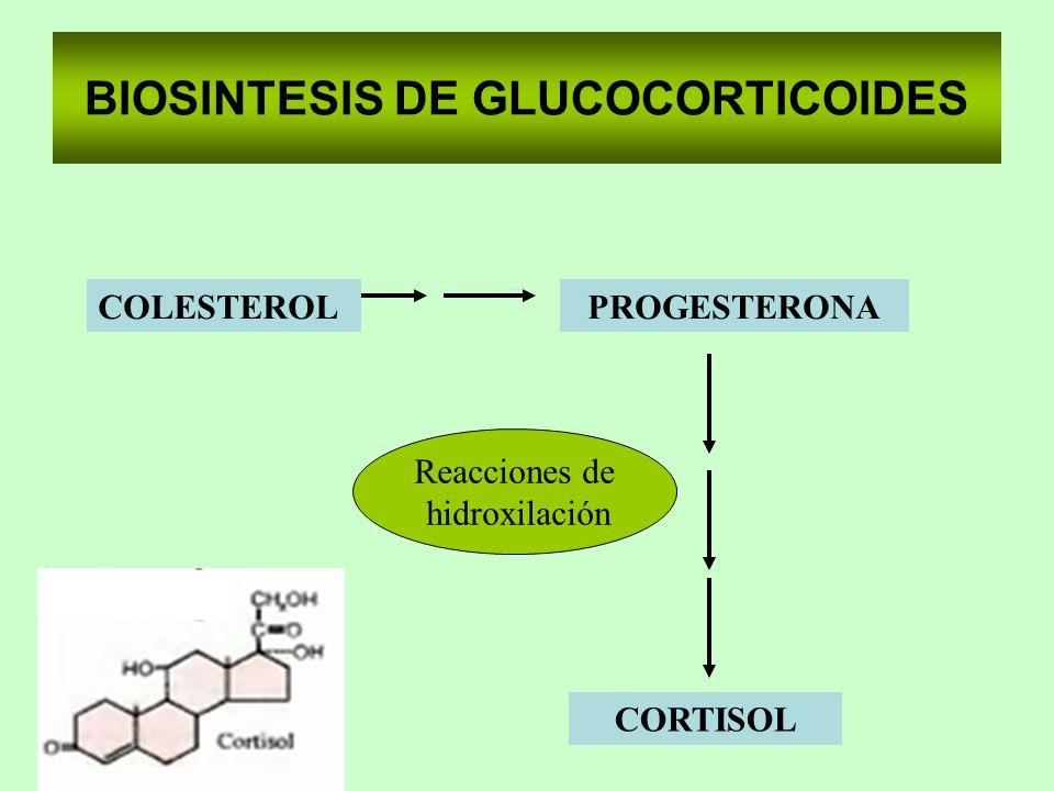 BIOSINTESIS DE GLUCOCORTICOIDES