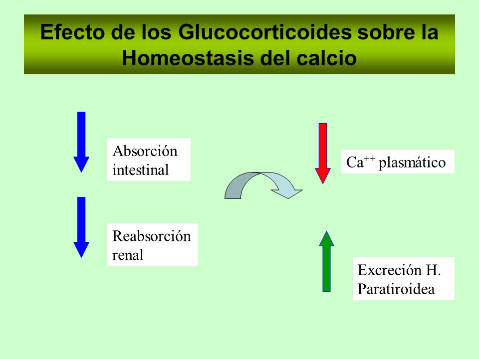 Efecto de los Glucocorticoides sobre la Homeostasis del calcio