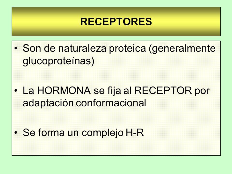 Son de naturaleza proteica (generalmente glucoproteínas)