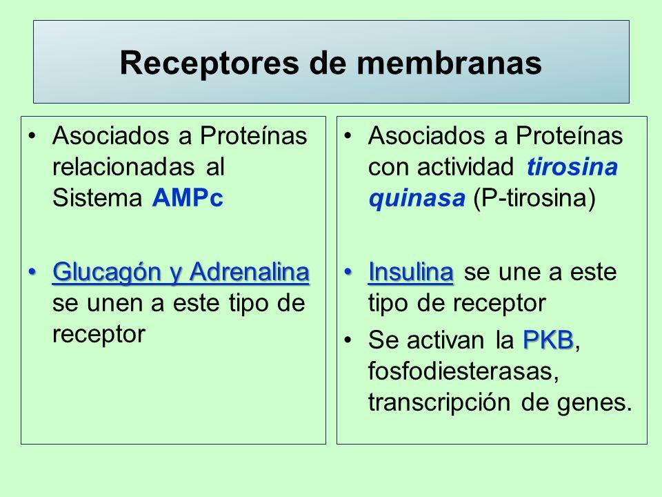 Receptores de membranas