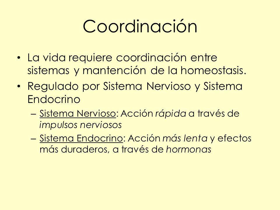 Coordinación La vida requiere coordinación entre sistemas y mantención de la homeostasis. Regulado por Sistema Nervioso y Sistema Endocrino.