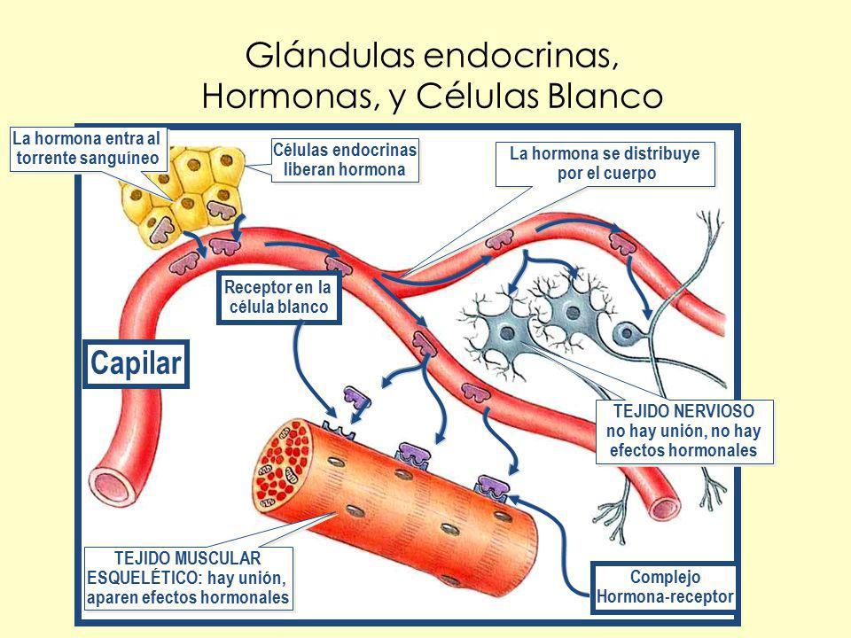 Glándulas endocrinas, Hormonas, y Células Blanco