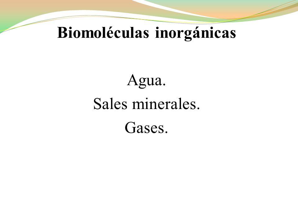 Biomoléculas inorgánicas Agua. Sales minerales. Gases.