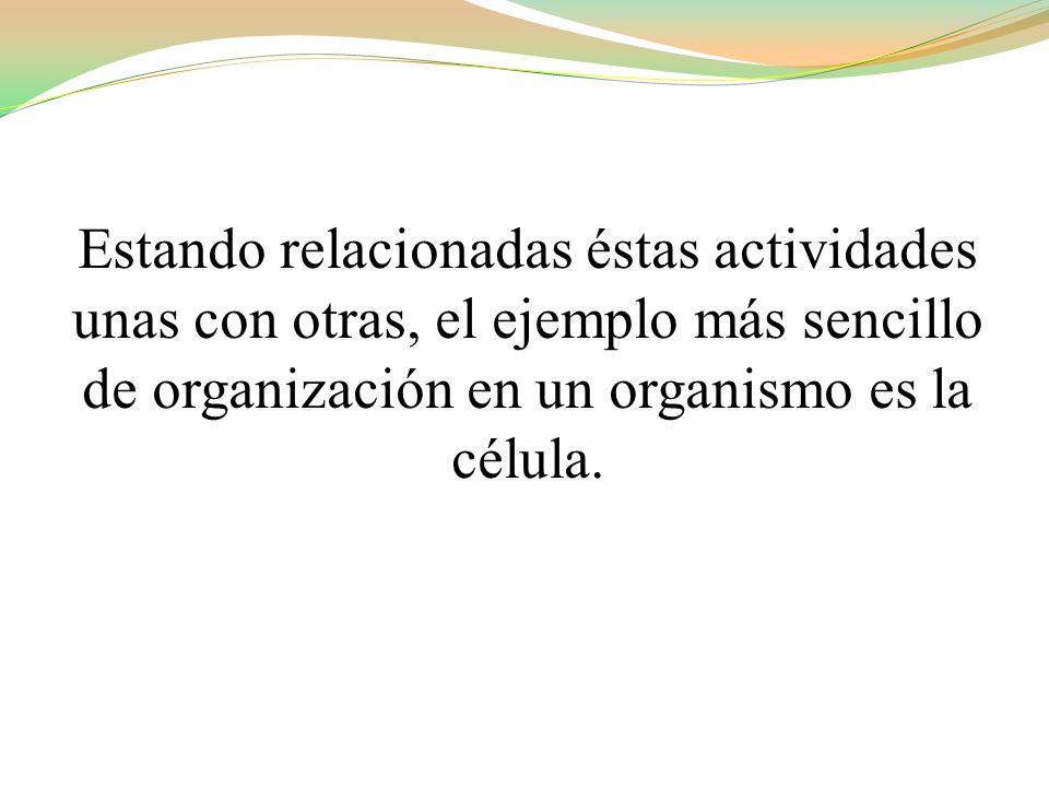 Estando relacionadas éstas actividades unas con otras, el ejemplo más sencillo de organización en un organismo es la célula.