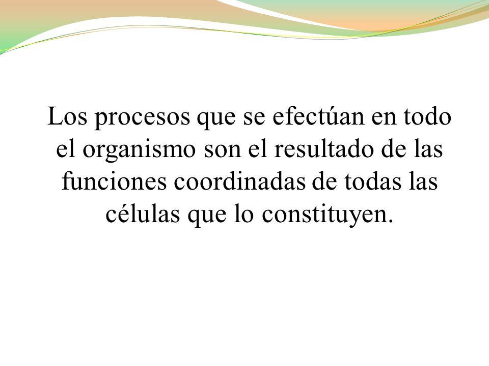 Los procesos que se efectúan en todo el organismo son el resultado de las funciones coordinadas de todas las células que lo constituyen.