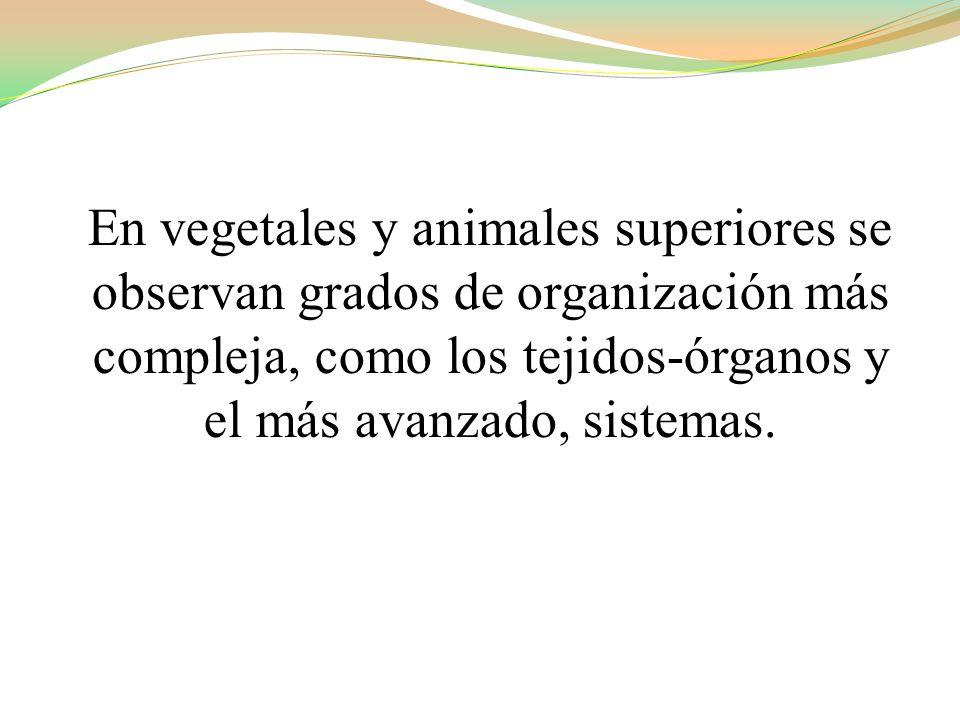 En vegetales y animales superiores se observan grados de organización más compleja, como los tejidos-órganos y el más avanzado, sistemas.