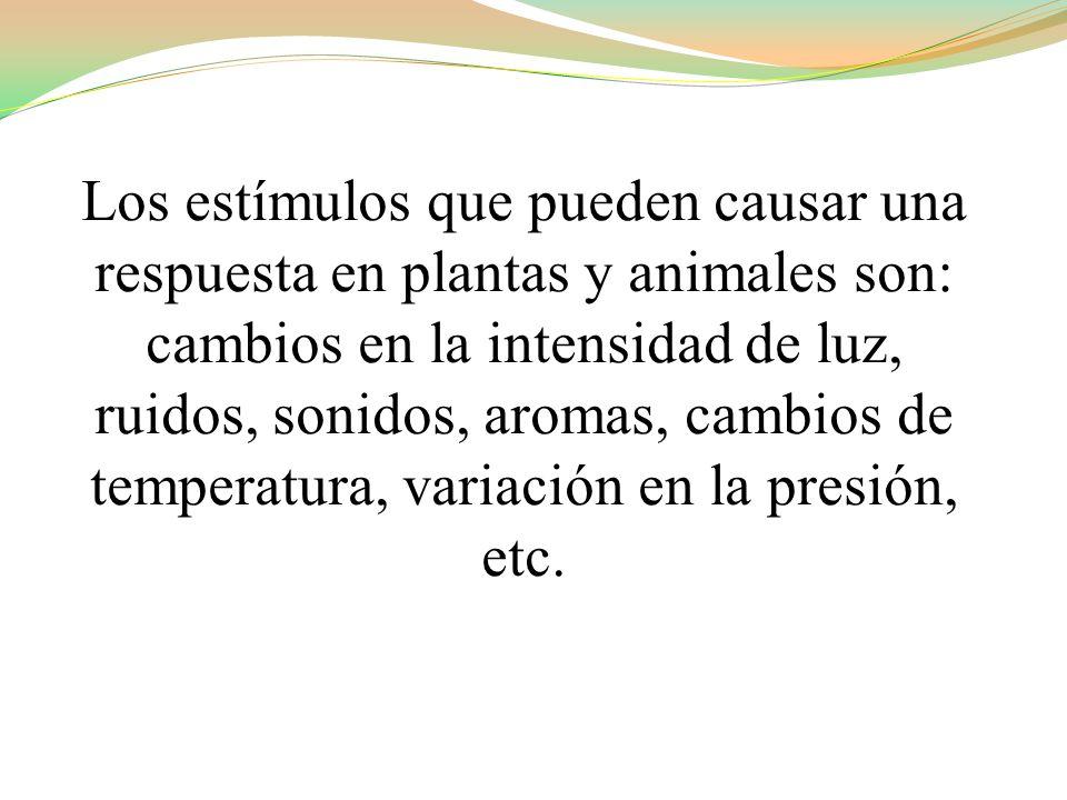 Los estímulos que pueden causar una respuesta en plantas y animales son: cambios en la intensidad de luz, ruidos, sonidos, aromas, cambios de temperatura, variación en la presión, etc.