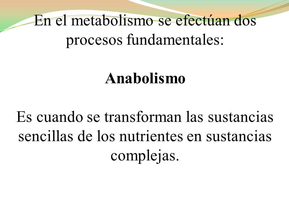 En el metabolismo se efectúan dos procesos fundamentales:
