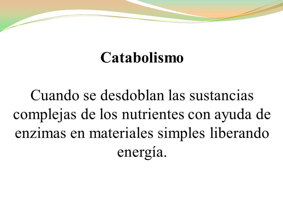 Catabolismo Cuando se desdoblan las sustancias complejas de los nutrientes con ayuda de enzimas en materiales simples liberando energía.