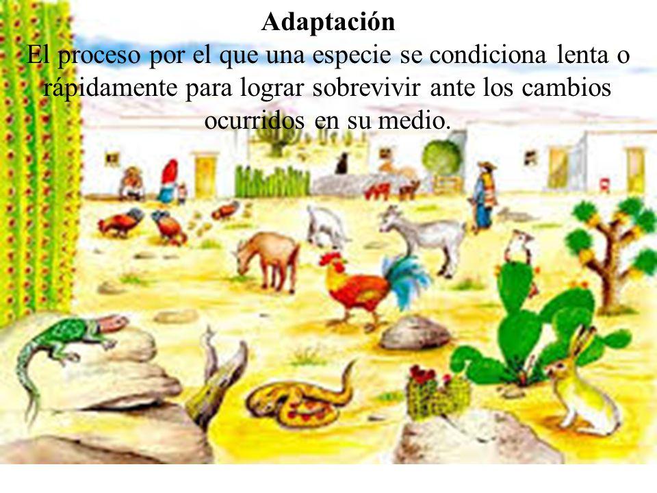 Adaptación El proceso por el que una especie se condiciona lenta o rápidamente para lograr sobrevivir ante los cambios ocurridos en su medio.