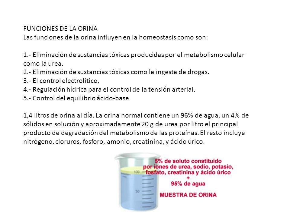 acido urico y jamon iberico que es el acido urico en nuestro cuerpo