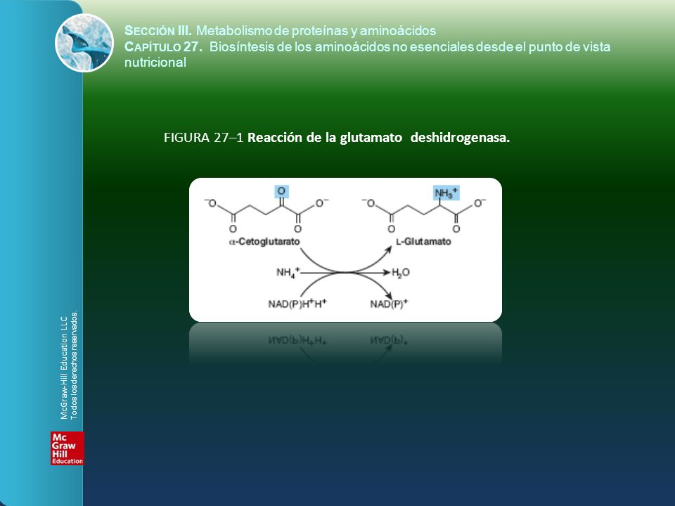 FIGURA 27–1 Reacción de la glutamato deshidrogenasa.