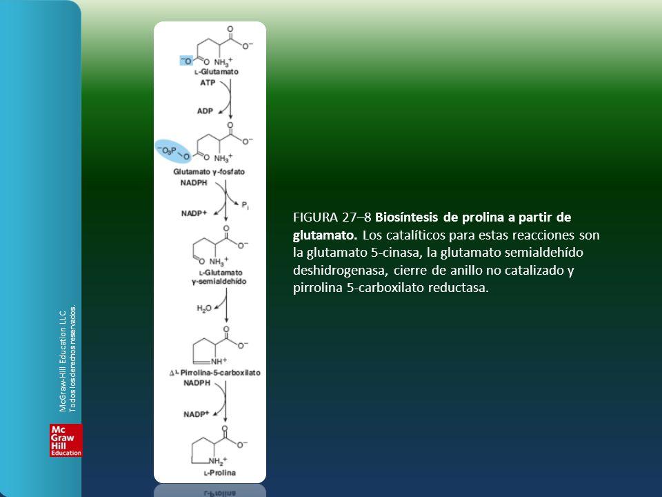 FIGURA 27–8 Biosíntesis de prolina a partir de glutamato