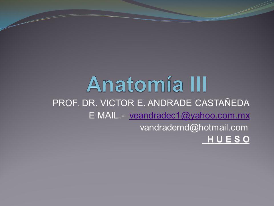Anatomía III PROF. DR. VICTOR E. ANDRADE CASTAÑEDA