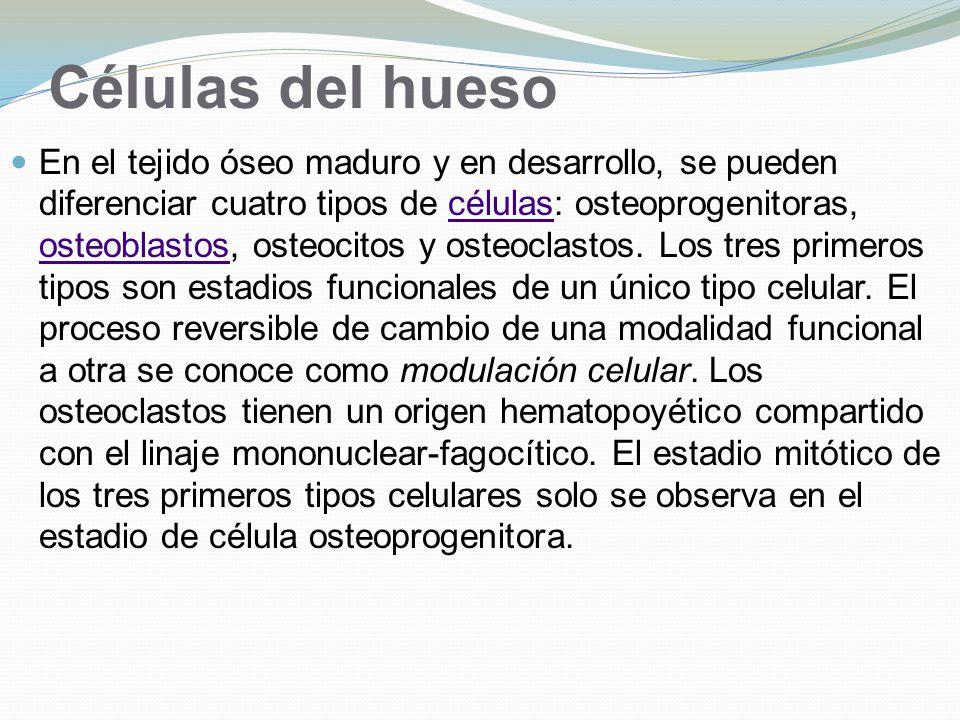 Células del hueso