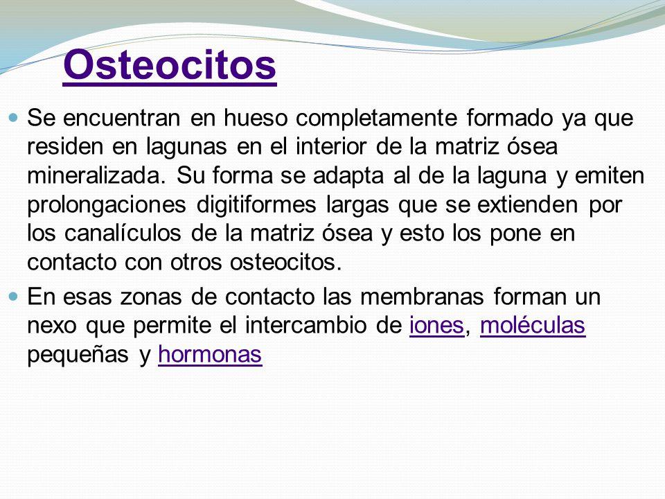 Osteocitos