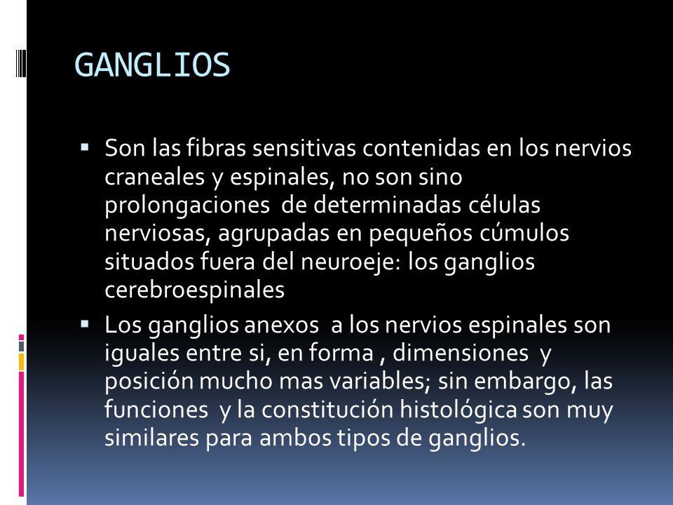 GANGLIOS