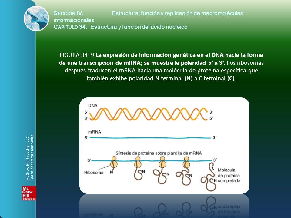Sección IV. Estructura, función y replicación de macromoléculas informacionales